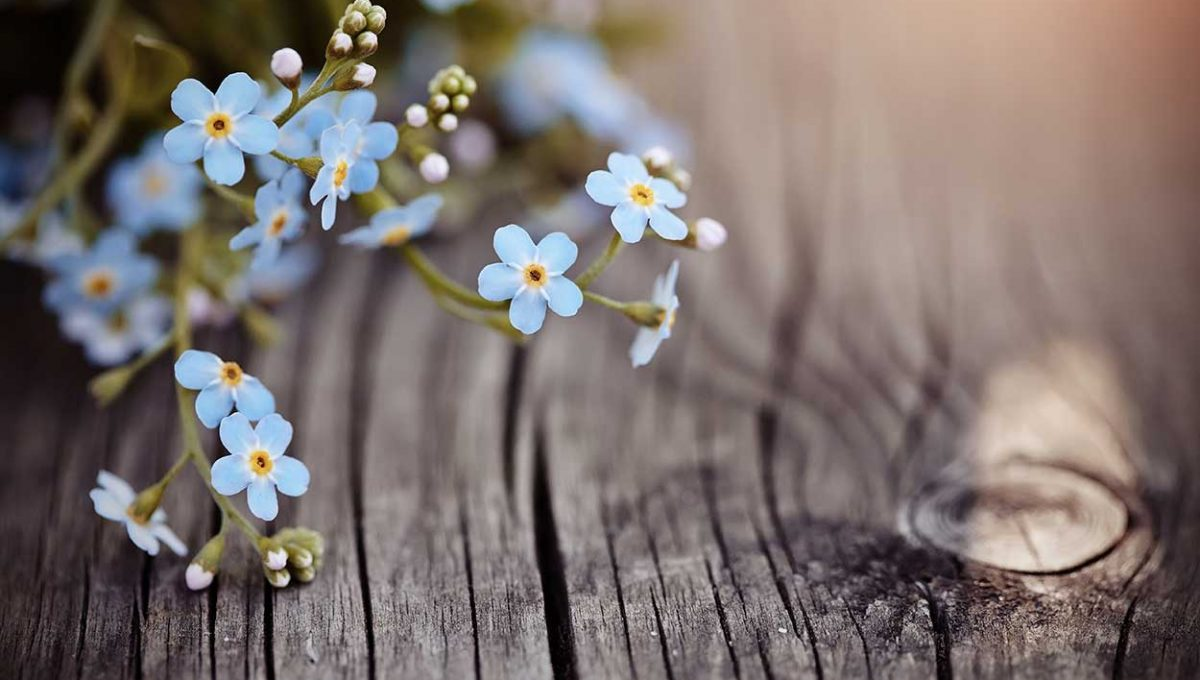 Duets of Forget-me-nots - 2 part harmony arrangement,performed by Free Harmony